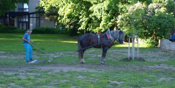 Kůň na zámku